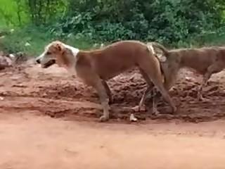 HD Indian Wild Full Movie
